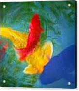 Being Koi Too Acrylic Print