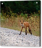 Being Stalked While Stalking Acrylic Print