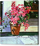 Bel-air Bougainvillea Pot Acrylic Print by David Lloyd Glover