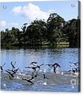 Belconnen Lake Acrylic Print