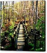 Belfast Trail Acrylic Print