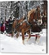 Belgian Draft Horses Pulls A Sleigh In Yosemite National Park Acrylic Print