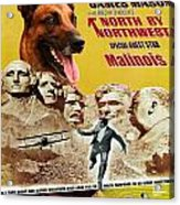 Belgian Malinois Art Canvas Print - North By Northwest Movie Poster Acrylic Print