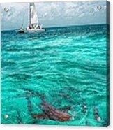 Belize Turquoise Shark N Sail  Acrylic Print