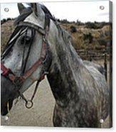 Bella On The Ranch Almanzora Mountain Spain  Acrylic Print