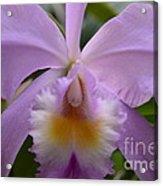 Belle Isle Orchid Acrylic Print