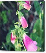 Bells In The Garden Acrylic Print by Cathie Tyler
