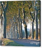 Beloved Plane Trees Acrylic Print