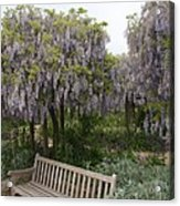 Bench And Wisteria Acrylic Print