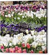 Bench Between The Tulips At Dallas Arboretum  Acrylic Print