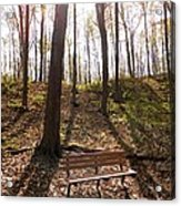 Bench In The Woods Acrylic Print