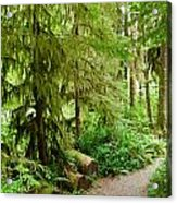 Bend In The Rainforest Acrylic Print