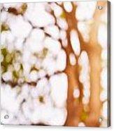 Beneath A Tree 14 5286 Triptych Set 1 Of 3 Acrylic Print by Ulrich Schade