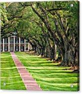 Beneath Live Oaks Acrylic Print