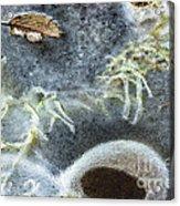 Beneath The Ice Acrylic Print