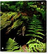 Beneath The Trees - Blue Ridge Mountains Acrylic Print