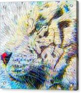 Bengal Explosion Acrylic Print