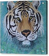 Bengal Tiger In Water Acrylic Print by David Hawkes