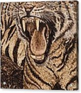 Bengal Tiger Acrylic Print by Vera White