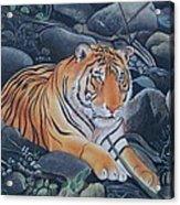 Bengal Tiger Wild Life Realistic Painting Water Color Handmade Artwork India Uk Acrylic Print