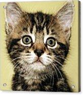 Benny The Pussy Cat Acrylic Print