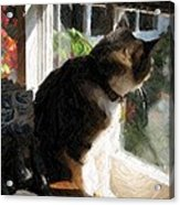 Bentley In The Window Acrylic Print