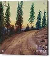 Bergebo Forest Acrylic Print