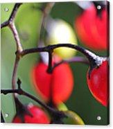 Berries 2 Acrylic Print