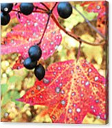 Berries And Leaves Acrylic Print
