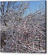 Berries In Ice Acrylic Print