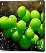 Berries On Water Acrylic Print