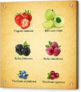 Berry Acrylic Print