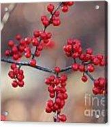 Berry Sparkles Acrylic Print