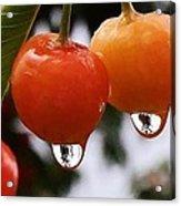 Berry Wet Acrylic Print