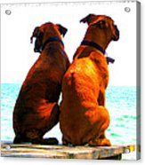 Best Friends Dog Photograph Fine Art Print Acrylic Print