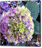 Beter Bloom Late Then Never Acrylic Print