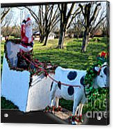 Betsy The Red Nose Moo-cow Acrylic Print