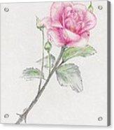 Betsy's Rose Acrylic Print