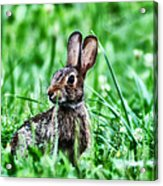 Better Get Started On Those Easter Eggs Acrylic Print