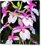 'betty' Orchid Acrylic Print