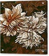 Betty's Beauty 1 Acrylic Print