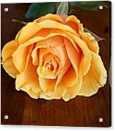 Betty's Rose Acrylic Print