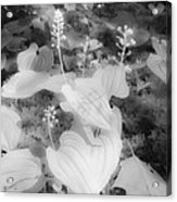 Between Black And White-12 Acrylic Print