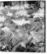 Between Black And White-14 Acrylic Print