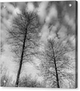 Between Black And White-30 Acrylic Print