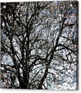 Between Heaven And Earth Expressionism Art Acrylic Print