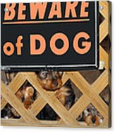 Beware Of Dog Acrylic Print by John Dauer