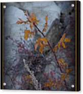 Beware The Thorns Acrylic Print