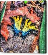 Beyond Chrysalis-tiger Swallowtail Acrylic Print