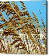 Beyond The Sea Oats Lies Eternity Acrylic Print by Lorraine Heath